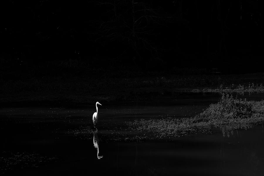 The Day of the Egret by Kolter Gunn