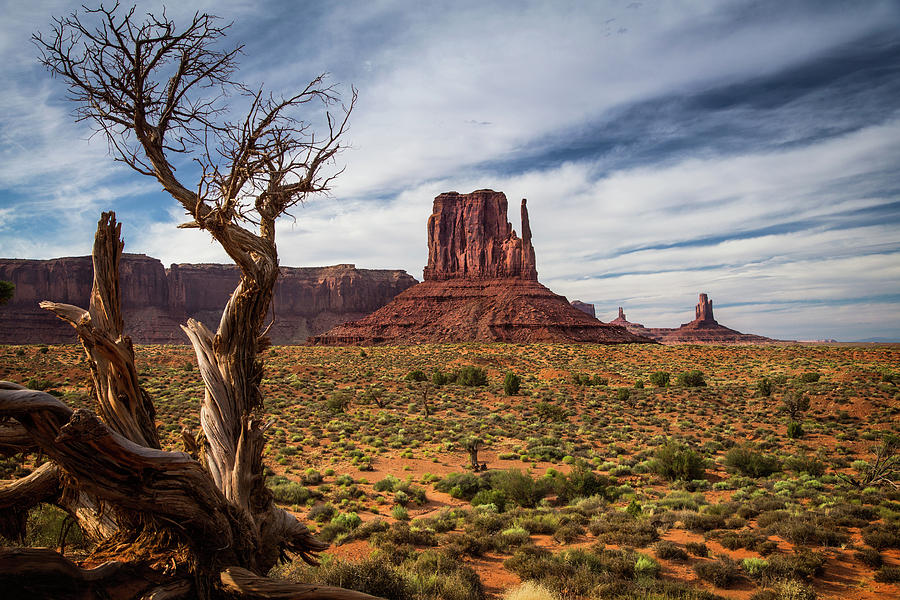 The Dead Tree and the Mitten Butte by Levin Rodriguez