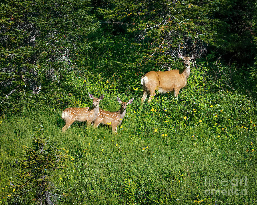 The Deer Family by Jon Burch Photography