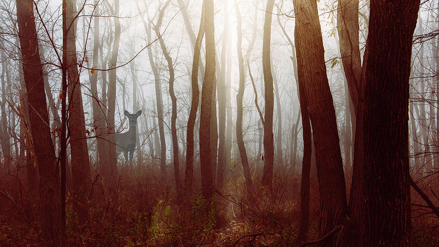 The Deer in the Fog by Joni Eskridge by Joni Eskridge