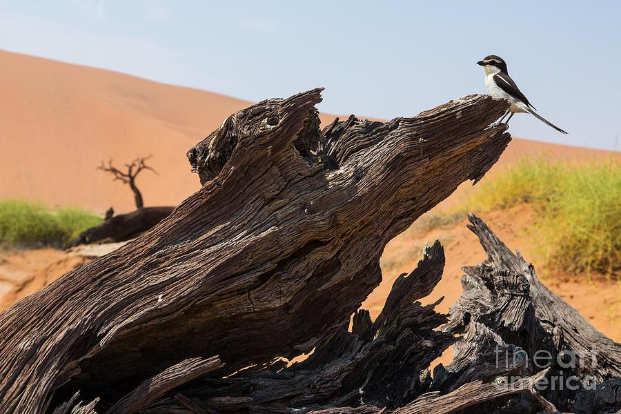 Fauna Photograph - The Desert Landscape by Stanislavbeloglazov