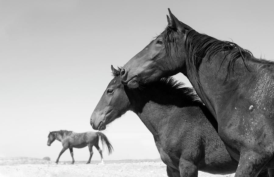 The Desolate Desert. by Paul Martin