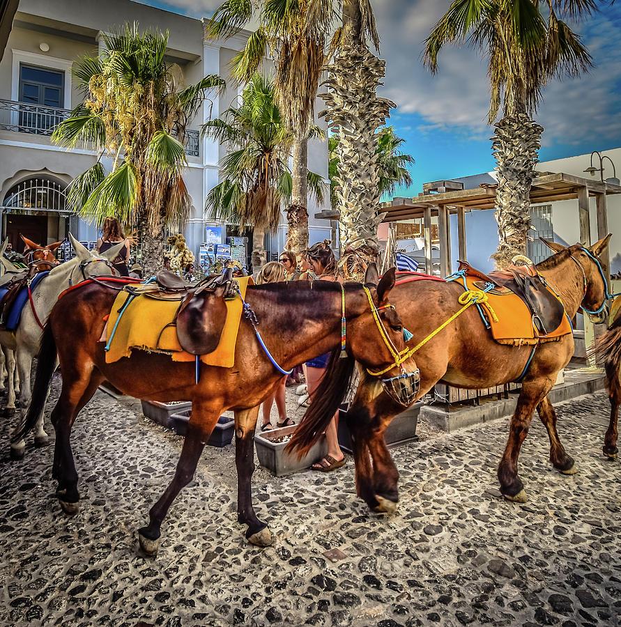 The Donkeys by Bill Howard