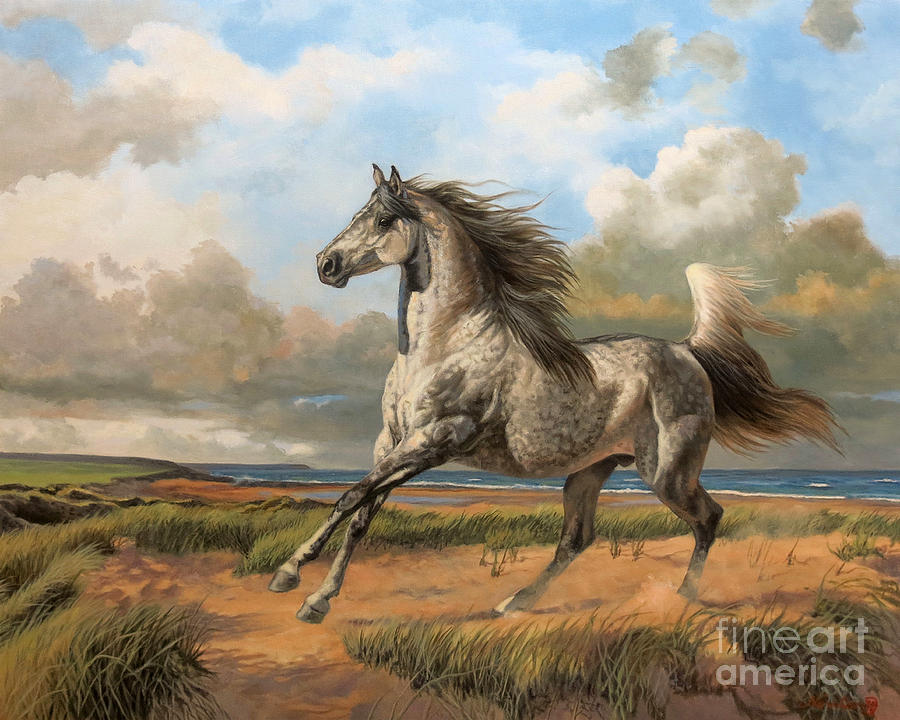 The Dune Horse by Jeanne Newton Schoborg