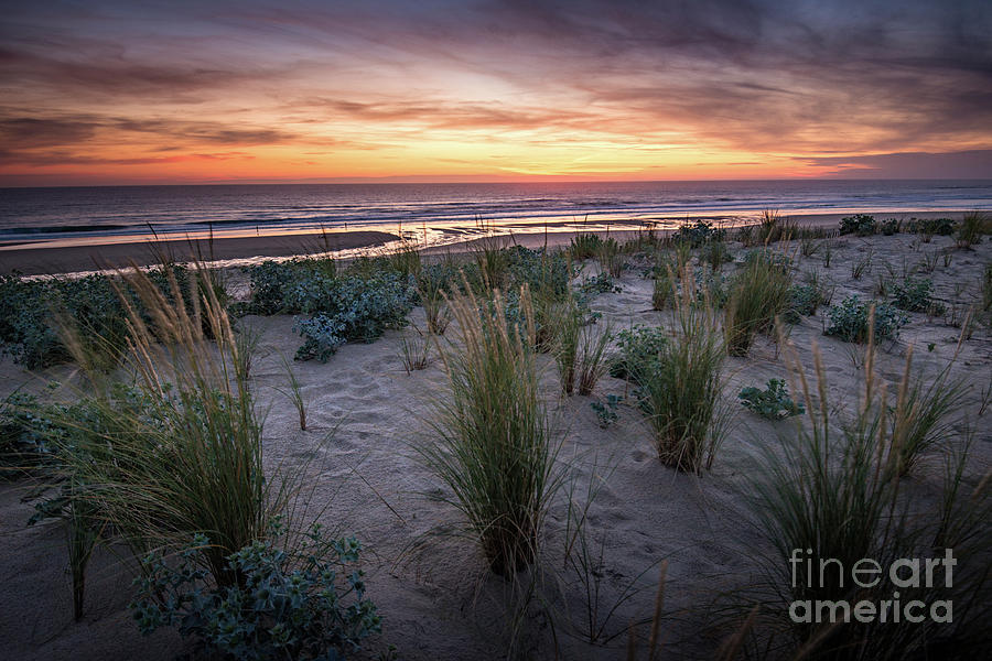 the dunes in the sunset light by Hannes Cmarits