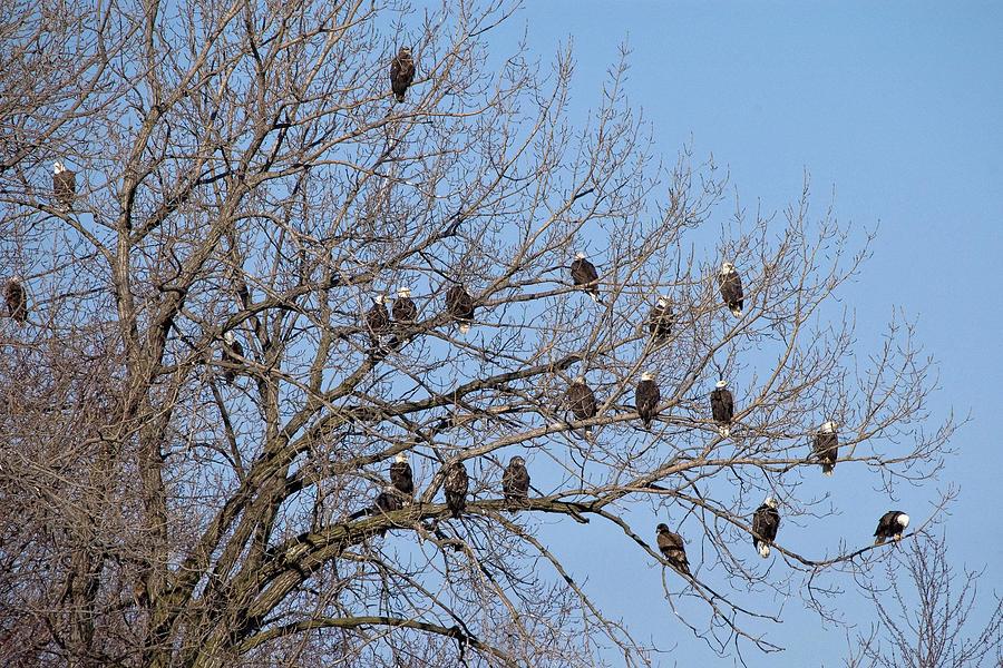 The Eagle Tree by Steve Stuller