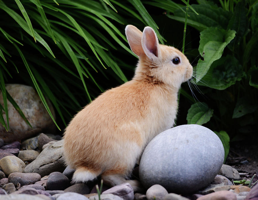 The Easter Bunny by Whispering Peaks Photography
