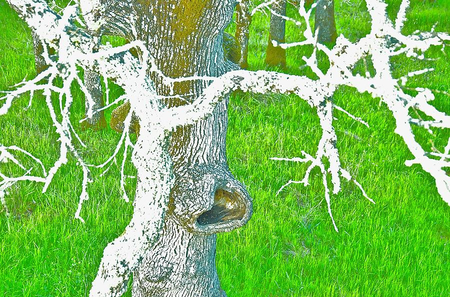 Tree Photograph - The Eating Tree #3 by Marty Klar