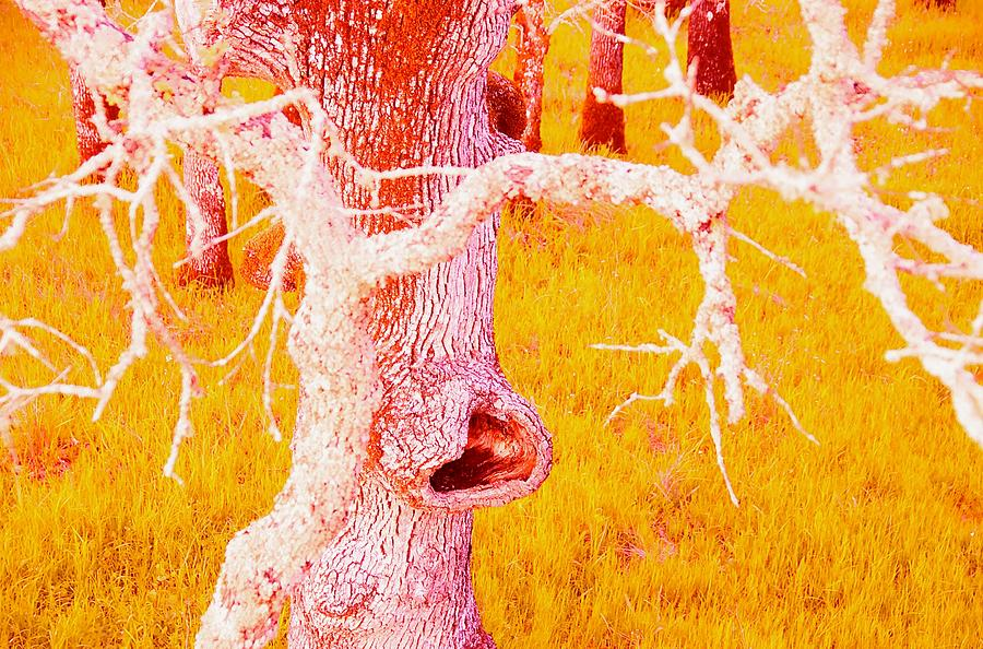 Tree Photograph - The Eating Tree #2 by Marty Klar