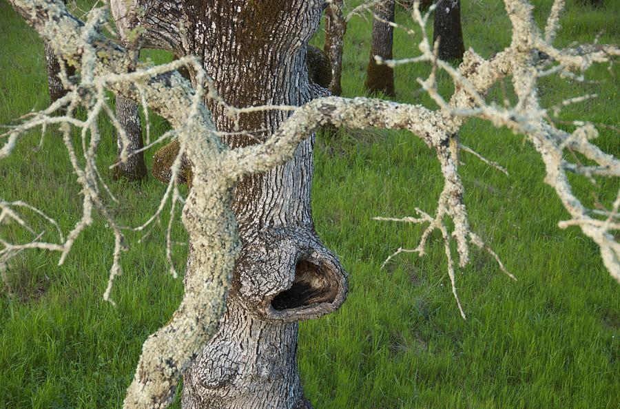 Tree Photograph - The Eating Tree #1 by Marty Klar