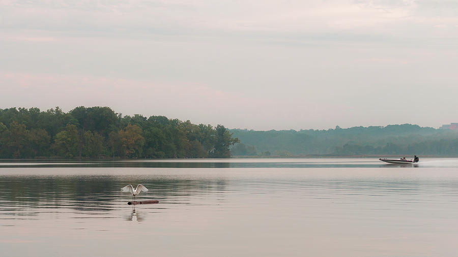 The Egret and the Speedboat by Kolter Gunn