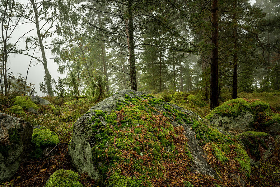 The Enchanted Swedish Forest by David Morefield