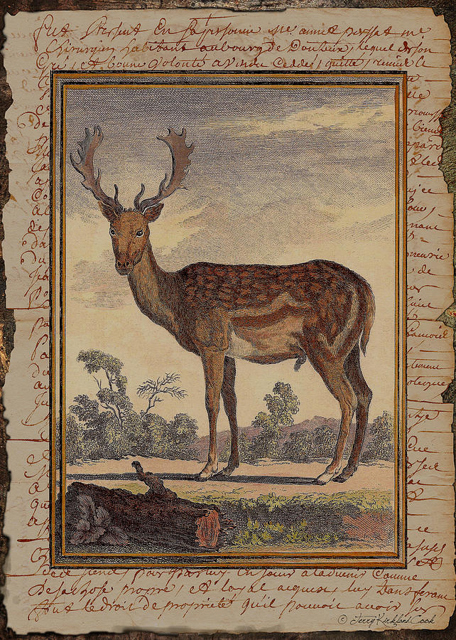 The English Fallow by Terry Kirkland Cook