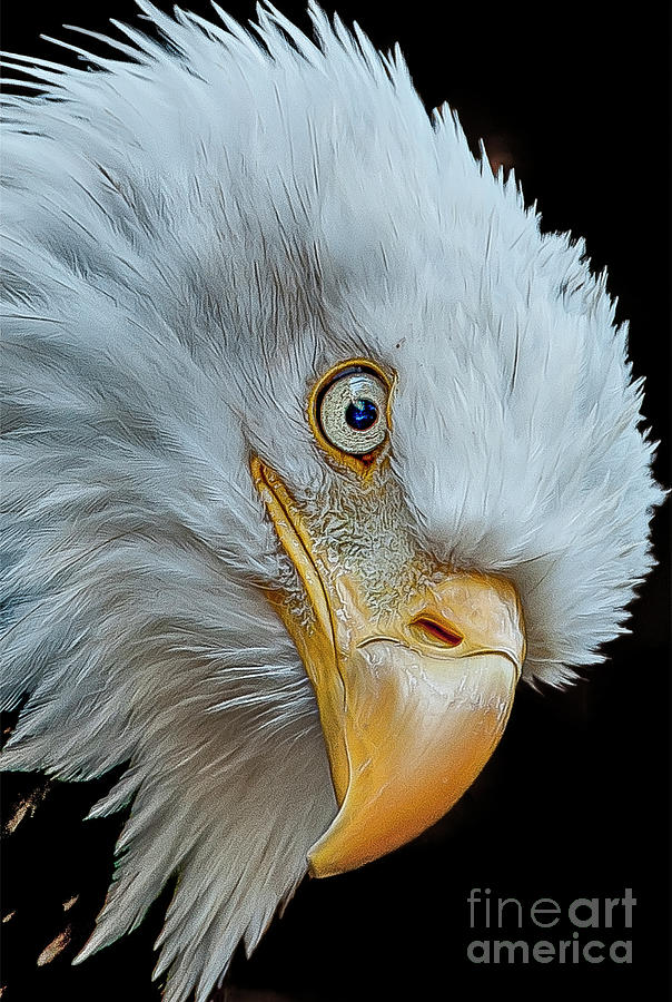 The Eye of The Eagle by Brian Tarr