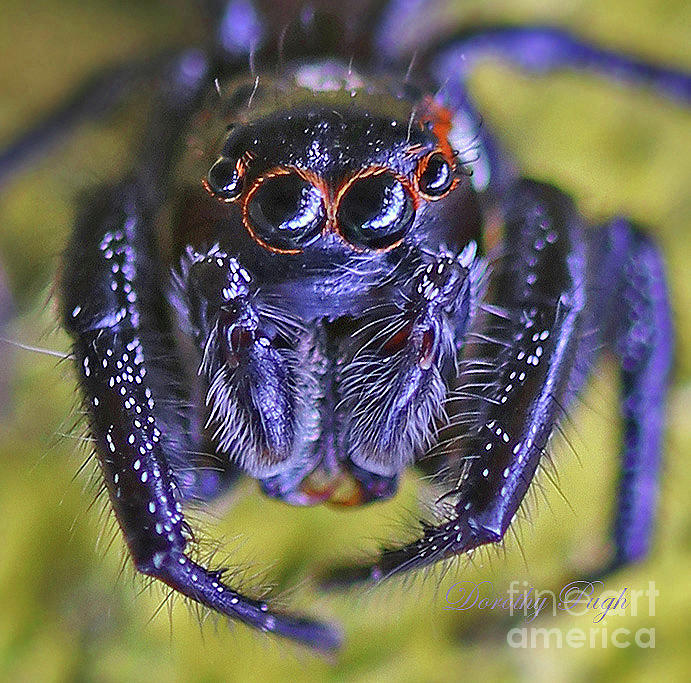 The Eyes Have It by Dorothy Pugh