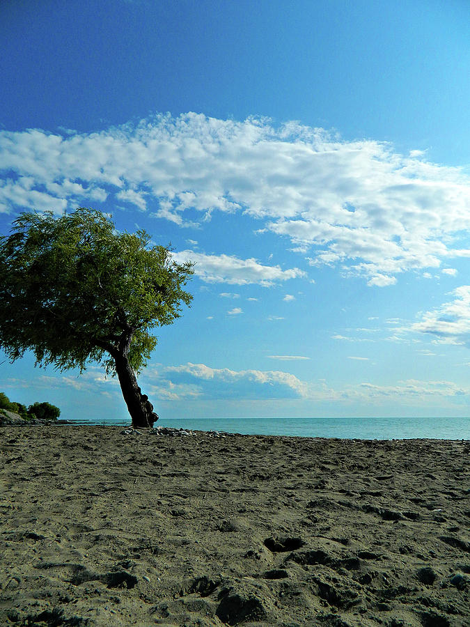 The Famous Beach Tree by Cyryn Fyrcyd