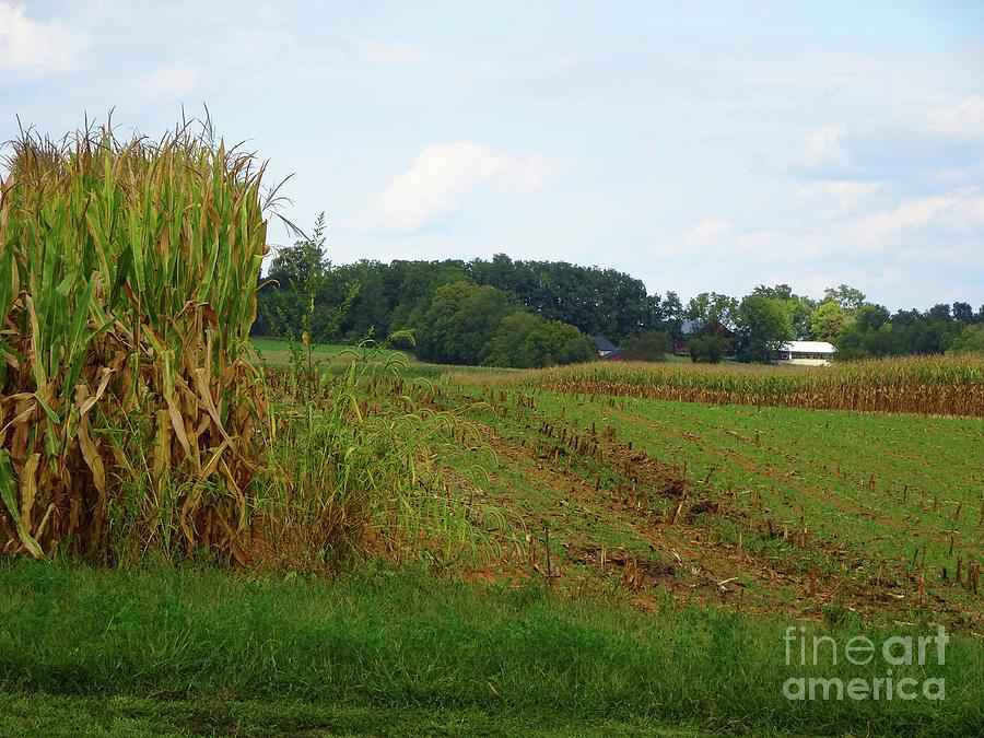 The Farm by Eunice Warfel