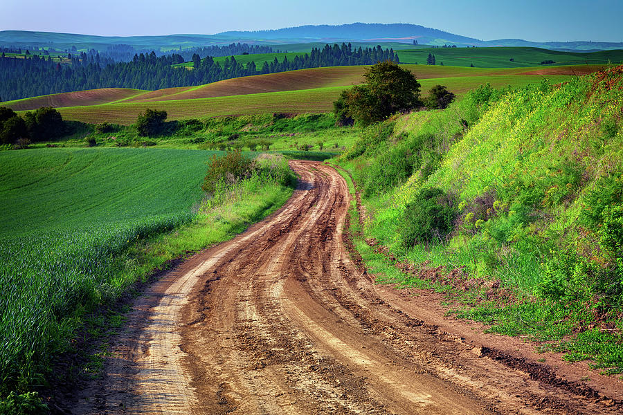 The Farm Road in the Palouse by Rick Berk