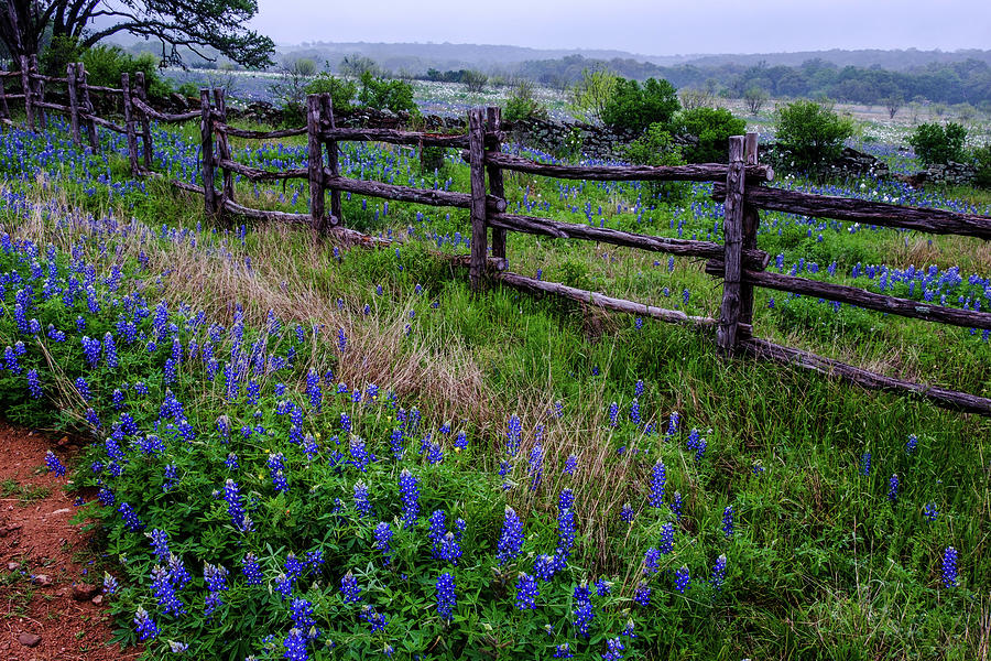 The Fence of Times Past by Johnny Boyd