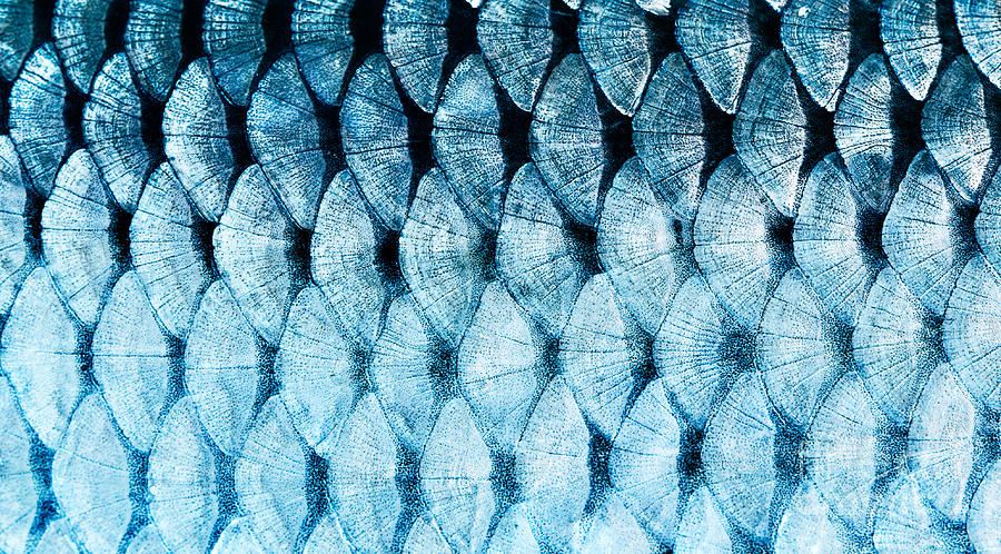 Small Photograph - The Fish Scale Close Up by Mycteria