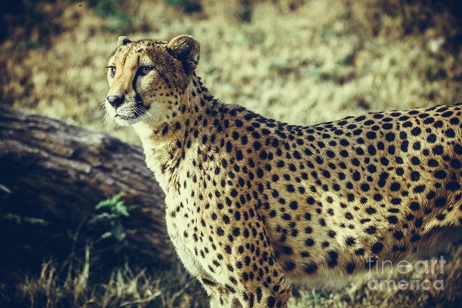 Mammal Photograph - The Flash by Dheeraj Mutha