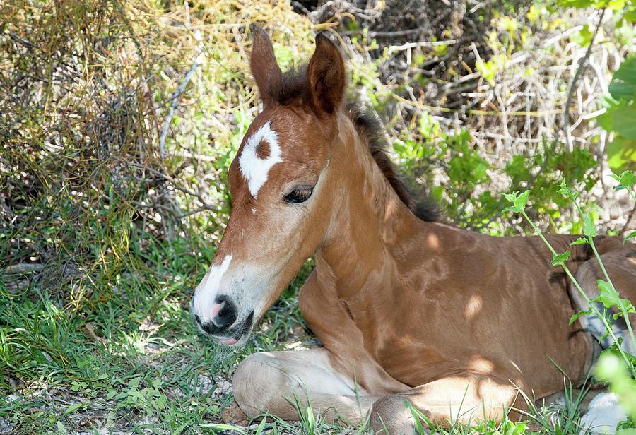 The Foal by Ramunas Bruzas