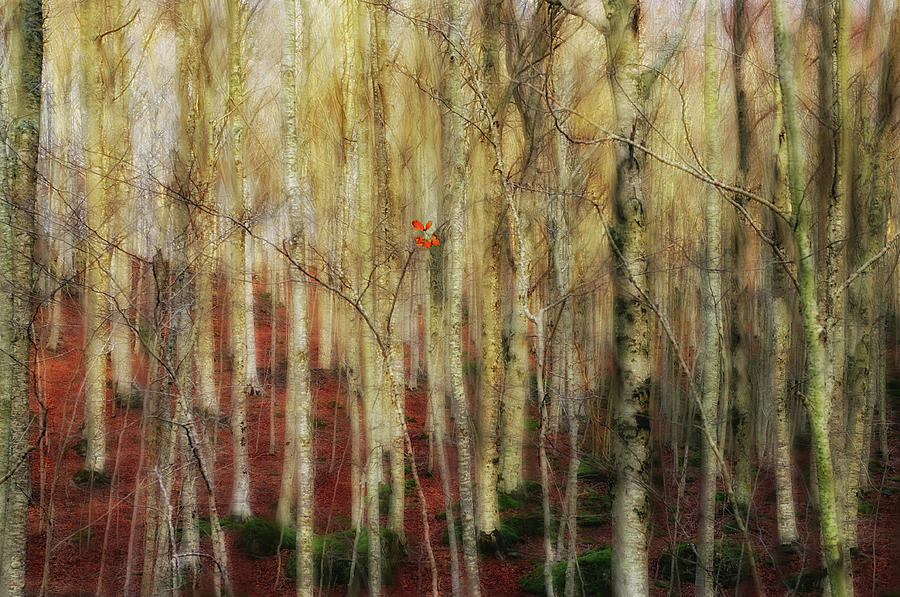 Birch Photograph - The Forest Of Ghosts by Francesco Martini