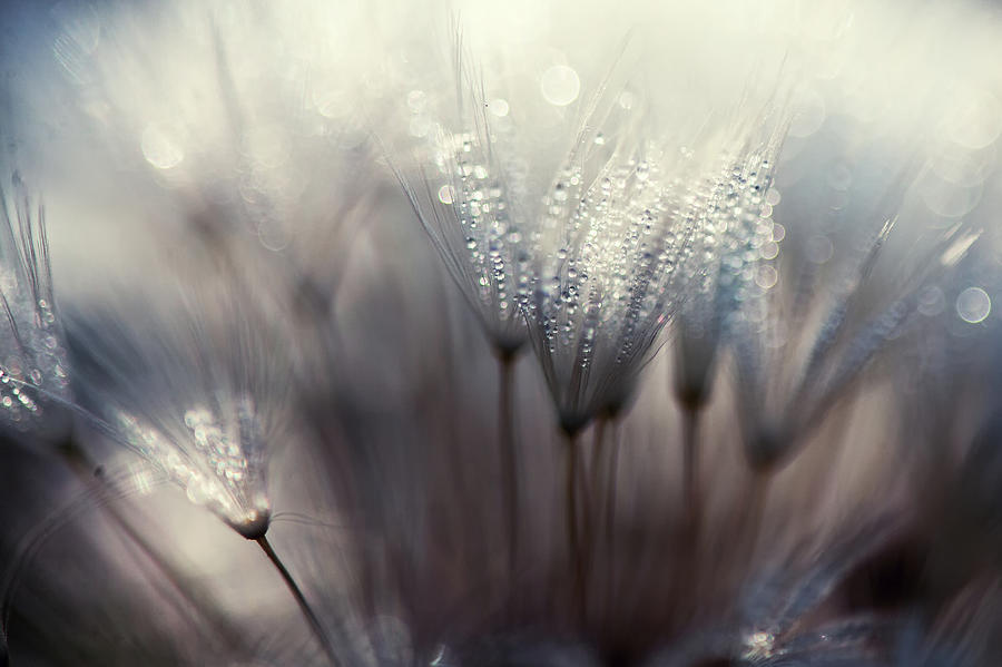 Dandelion Photograph - The Forest by Thomas Dam