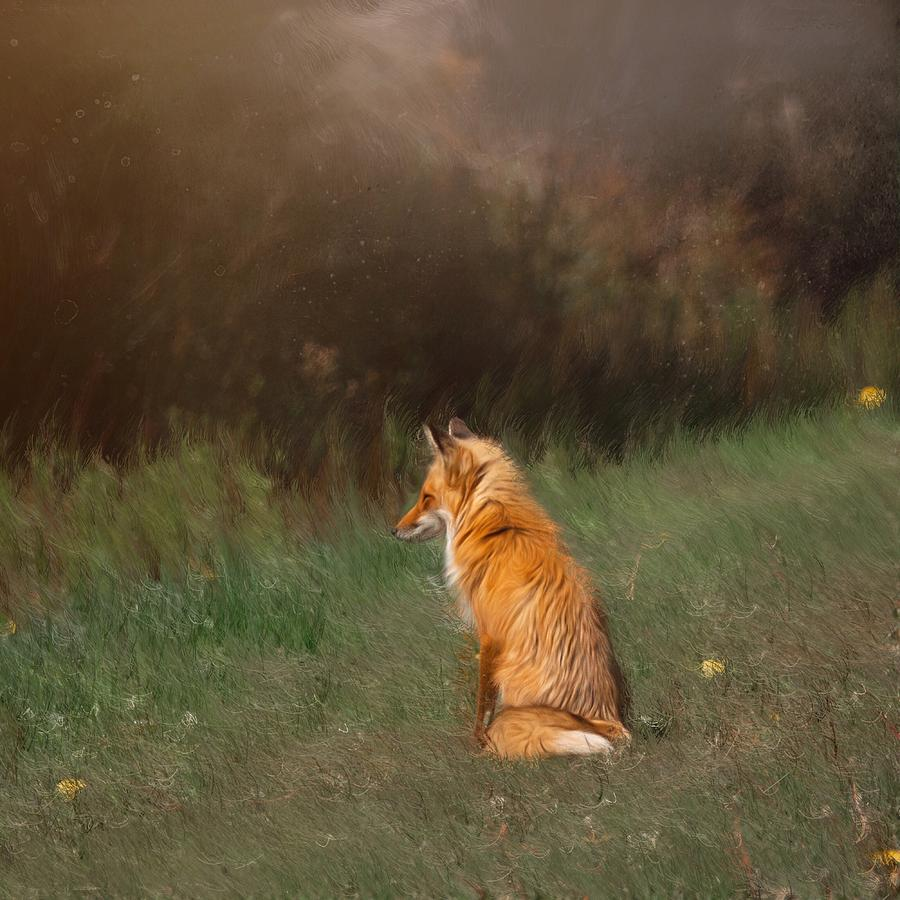 The Fox Looks Away by Caroline Jensen