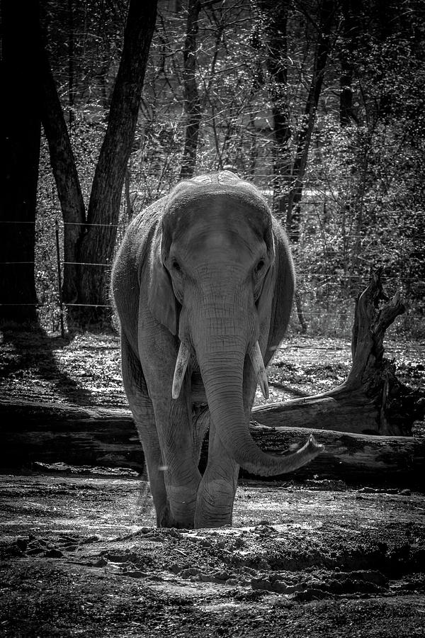 The Friendly Elephant  by Rick Cooper