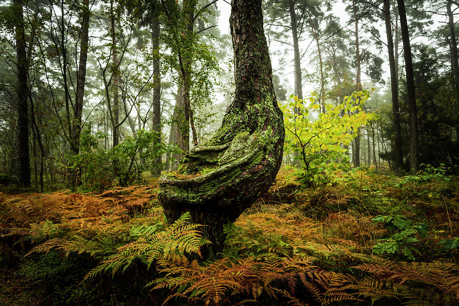 The Funny Tree by David Morefield