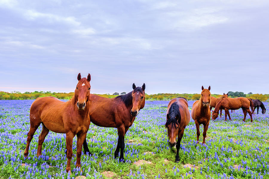The Gang of Mares by Johnny Boyd