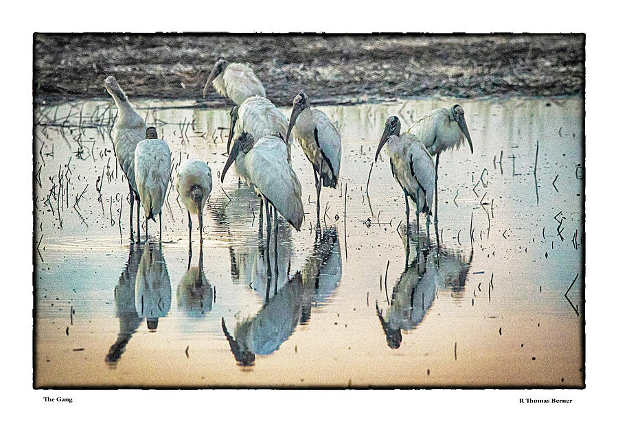 The gang by R Thomas Berner