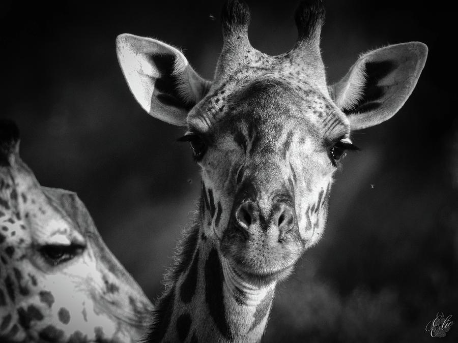 The Giraffe by Elie Wolf