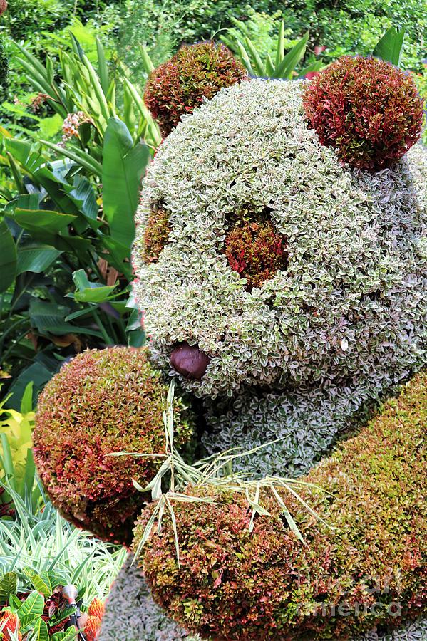 The Great Panda Topiary Photograph