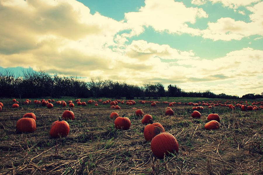 Pumpkin Photograph - The Great Pumpkin by Candice Trimble