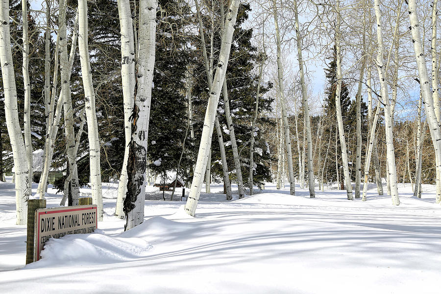 Dixie National Forest Photograph - The Greatest Snow On Earth by Donna Kennedy