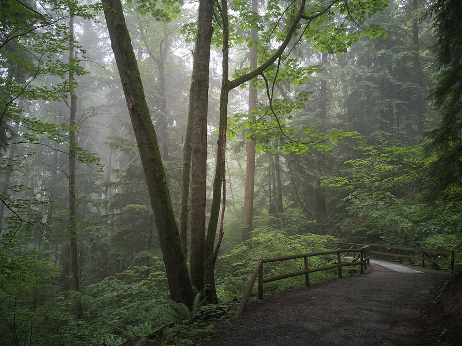 Temperate Rainforest Photograph - The greens of Burnaby Mountain by Jordan Barnes