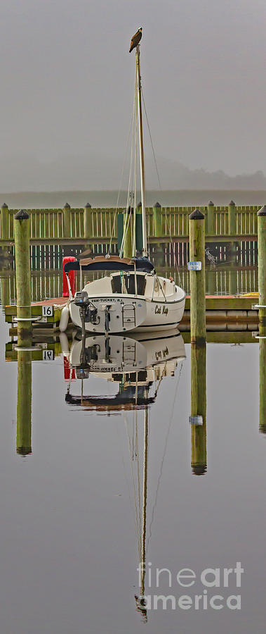 Osprey Photograph - The Harbormaster by Blair Howell