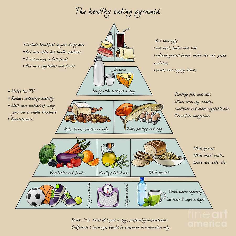 Symbol Digital Art - The Healthy Eating Pyramid Colorful by Dalmingo