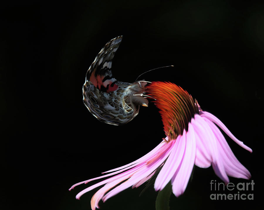 The Heat Melted The Butterfly And Flower by Karen Silvestri