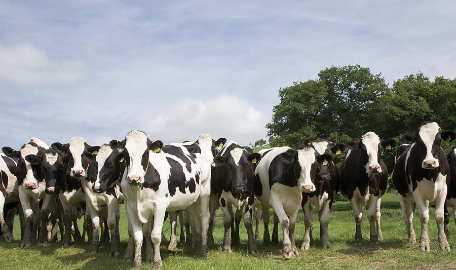 The Herd Photograph by Dageldog