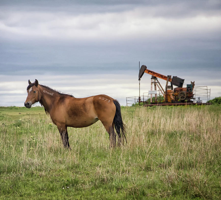 The Horse and the Pump Jack by Jolynn Reed