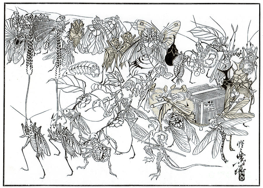 The Insect Daimio Cortege, 1878 1886 Drawing by Print Collector