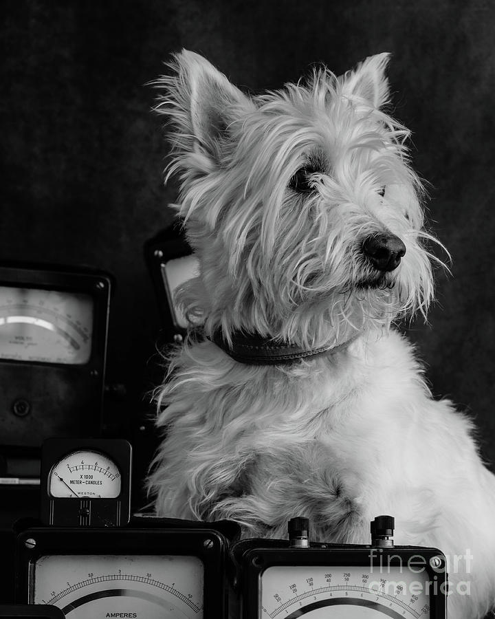 Dog Photograph - The Inventor Dog by Edward Fielding