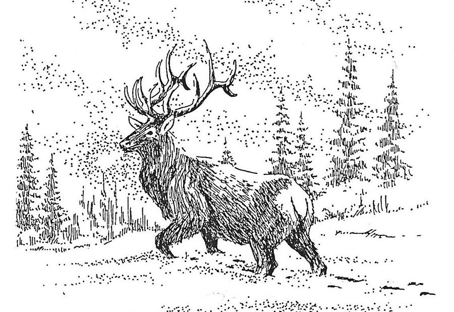 Elk Drawing - The King by Kevin Heaney