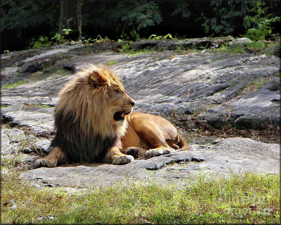 The King Of Beast by Sandra Huston