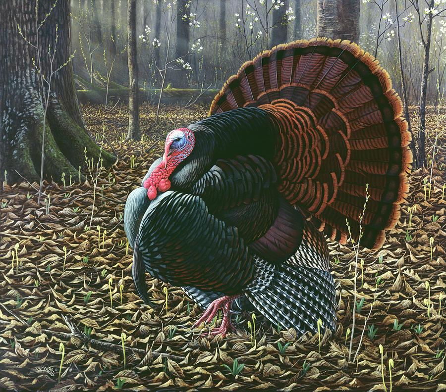 Birds Painting - The King Of Spring - Wild Turkey by Wilhelm Goebel