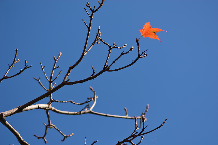 The Last Leaf During Fall Photograph by By Ken Ilio