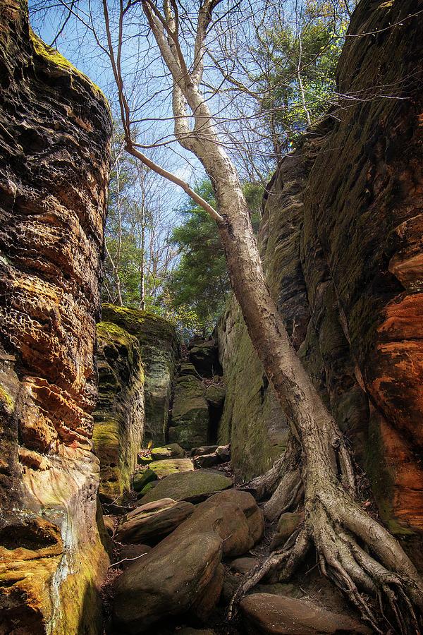 The Ledges Trail  by Rosette Doyle